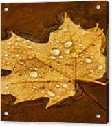 Floating Maple Leaf Txt Acrylic Print