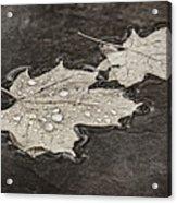 Floating Maple Leaves Bw Acrylic Print