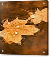 Floating Maple Leaves Pnt Acrylic Print