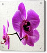 Floating Orchid Acrylic Print