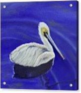 Floating Pelican Acrylic Print