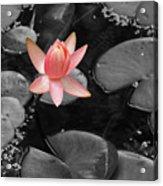 Floating Pink Acrylic Print