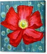 Floating Poppy Acrylic Print
