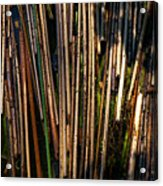 Floating Reeds Acrylic Print