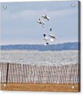 Flock Of Gulls Acrylic Print