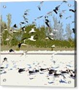 Flock Of Seagulls Acrylic Print