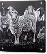 Flock Of Sheep Acrylic Print