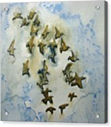 Flocking Birds Acrylic Print