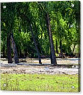 Flood Plain Acrylic Print