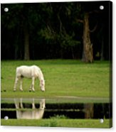 Flooded Field In May Acrylic Print