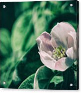 Flora 2821 Acrylic Print