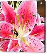 Flora And Fauna Acrylic Print