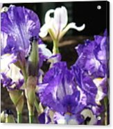 Flora Bota Irises Purple White Iris Flowers 29 Iris Art Prints Baslee Troutman Acrylic Print