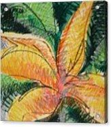 Flora Exotica 2 Acrylic Print