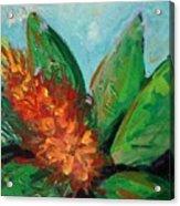Flora Exotica B Acrylic Print