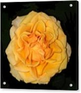 Flora Fantasy 5.14.17 Florainterpretation Acrylic Print