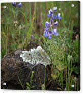 Flora On The Plateau Acrylic Print