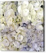 Florabunda Acrylic Print