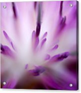 Florabundance 1 Acrylic Print
