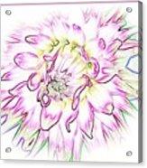 Floradoodle Acrylic Print