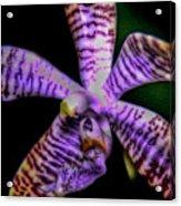 Floral 1 Acrylic Print