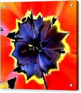 Floral 1229 Acrylic Print