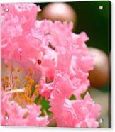 Floral 4 Acrylic Print