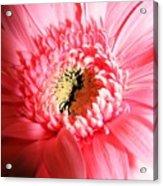 Floral 41 Acrylic Print