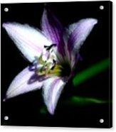 Floral 7-24-09 Acrylic Print