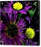 Floral 81 Acrylic Print