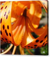Floral Abstracts Art Prints Summer Tiger Lily Baslee Troutman  Acrylic Print