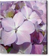Floral Art Hydrangea Flowers Purple Lavender Baslee Troutman Acrylic Print