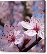 Floral Art Pink Spring Blossoms Prints Blue Sky Baslee Troutman Acrylic Print