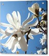 Floral Art Print Landscape Magnolia Tree Flowers White Baslee Troutman Acrylic Print