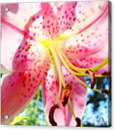Floral Art Print Pink Summer Lily Flower Lilies Baslee Troutman Acrylic Print