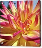 Floral Art Prints Bright Dahlia Flower Canvas Baslee Troutman  Acrylic Print