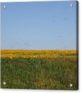Floral Blur Acrylic Print