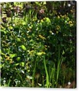 Floral Border Acrylic Print