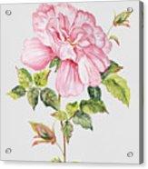 Floral Botanicals-jp3779 Acrylic Print