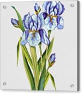 Floral Botanicals-jp3786 Acrylic Print
