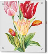 Floral Botanicals-jp3788 Acrylic Print
