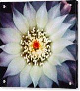 Floral Closeup One Acrylic Print