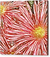 Floral Design No 1 Acrylic Print