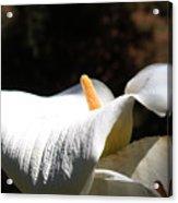 Floral Detail Acrylic Print