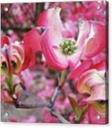 Floral Dogwood Tree Flowers Baslee Troutman Acrylic Print