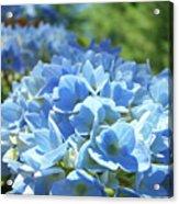 Floral Fine Art Blue Hydrangeas Baslee Troutman Acrylic Print