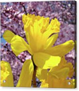 Floral Fine Art Daffodils Art Prints Spring Flowers Sunlit Baslee Troutman Acrylic Print
