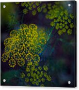 Floral Fireworks Acrylic Print