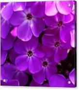 Floral Glory Acrylic Print