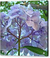 Floral Landscape Blue Hydrangea Flowers Baslee Troutman Acrylic Print